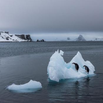 Banquise Arctique et Antarctique : atteinte des seuils annuels